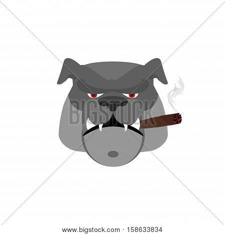 Angry Dog with Cigar. Aggressive Bulldog Isolated