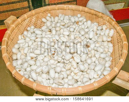 Silkworm cocoons at wicker basket silk production process