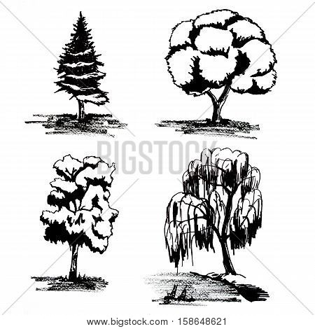 illustration of black and white trees spruce birch willow oak