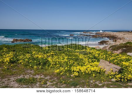 a field of wildflowers along the scenic central California coast