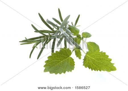 Fresh Herbs. Rosemary And Lemon Balm