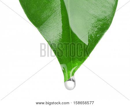 Essential oil dropping from green leaf isolated on white