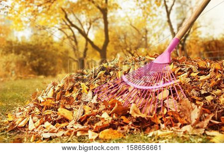 Fan rake and pile of fallen leaves in autumn park, close up view