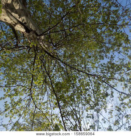 Árbol en la ciudad de buenos aires