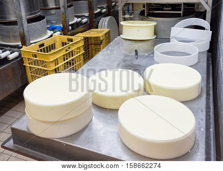 Evillers France - August 31 2016: Process of putting Gruyere de Comte Cheese into the forms at the dairy in Franche Comte Burgundy in France.