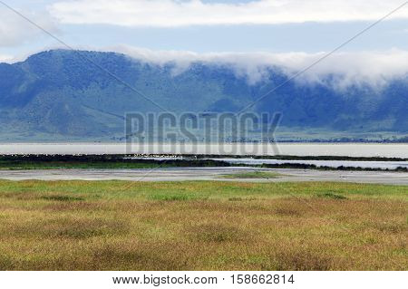 Blooming Valley in the Ngorongoro Crater Conservation Area on Lake Magadi background with a large population of flamingos (Phoeniconaias minor), Tanzania. East Africa