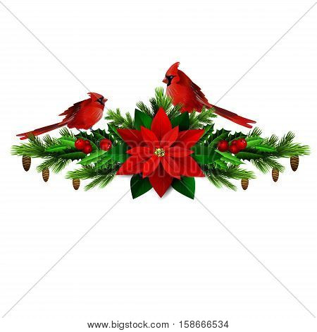 Christmas decoration with evergreen treess holly and pinecone and poinsettia and ribbon isolated cardinal bird