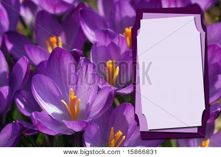 Crocus Flower Invitation Or Copy Space