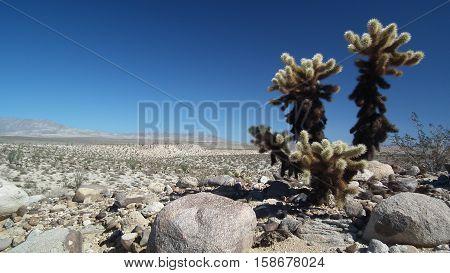 The Sentinels of the Anza-Borrego Desert, Summer 2016