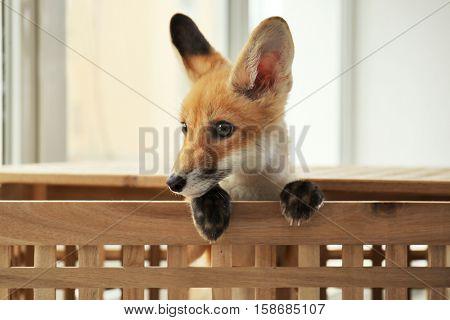 Little fox cub sitting in wooden box