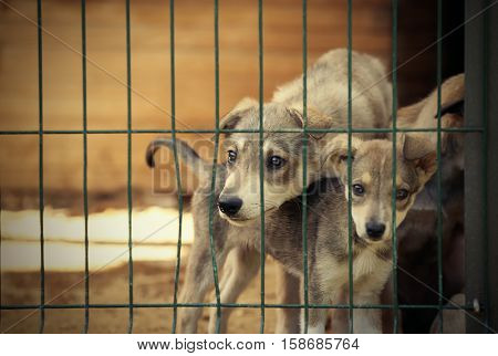 Cute homeless puppies in animal shelter cage