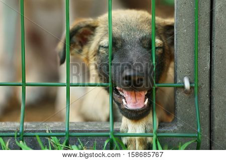 Portrait of homeless puppy in animal shelter cage