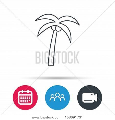 Palm tree with coconuts icon. Travel or vacation symbol. Nature environment sign. Group of people, video cam and calendar icons. Vector
