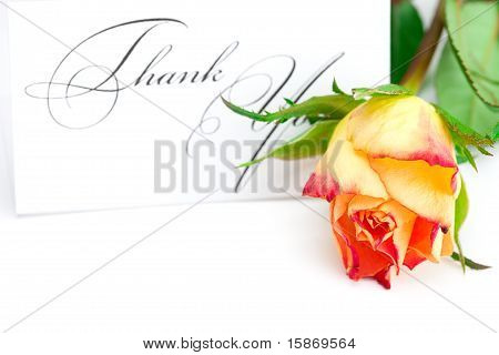 Yellow Red Rose And A Card  With The Words Thank You Isolated On White