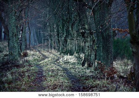 Dark winter path between dead trees. Nature season specific concept.