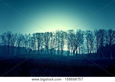 Dark dead winter trees and sky. Nature season specific concept. Blue colors.