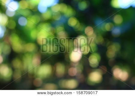 Green round bokeh of the trees and sunny day light