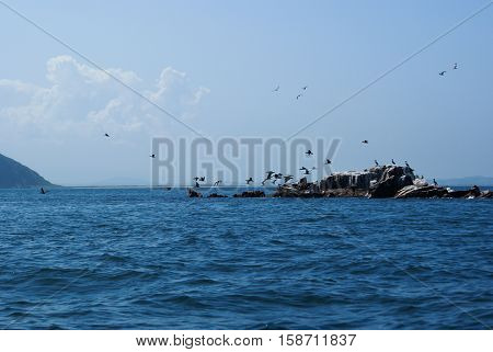 A flock of cormorants taking off from a small island.