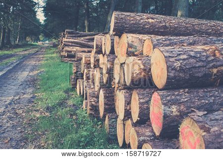 Freshly sawn logs in a forest setting in the Netherlands