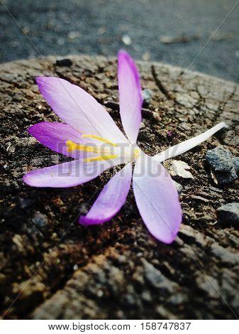 The little pruple flower on the wood