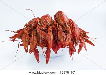 Plate Of Red Boiled Crayfishes  Isolated On White Background