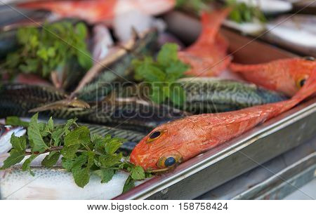 Fish market, fresh fish in street market, fresh fish, social issue, fish market in Marsaxlokk, Malta, street market