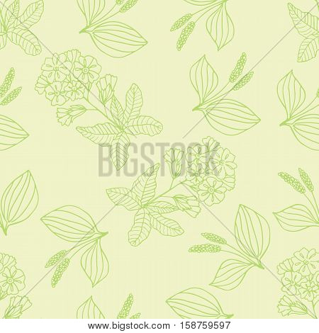 Vector handdrawn pattern made with medical herbs plantago and primula
