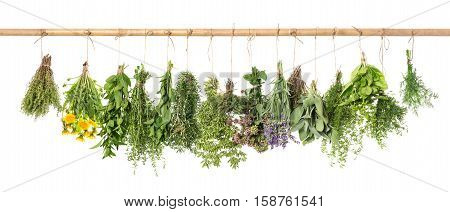 Fresh herbs hanging isolated on white background. Basil rosemary sage thyme mint oregano dill marjoram savory lavender dandelion