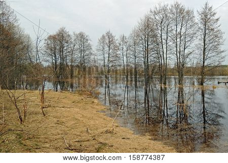 Spring floods Berezina River in April water trees reflection