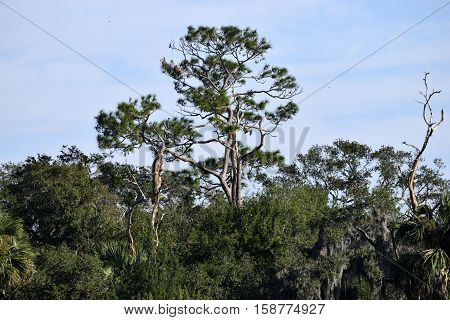 Marsh land background landscape at St. Augustine, Florida
