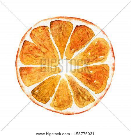 Slice of orange isolated on white background. Watercolor illustration