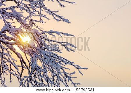 Winter background - frozen branches against sunlight, cope space for text