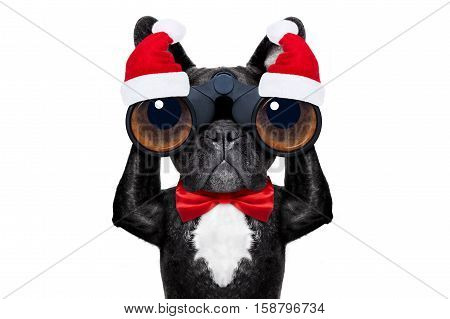 Santa Claus Christmas Dog
