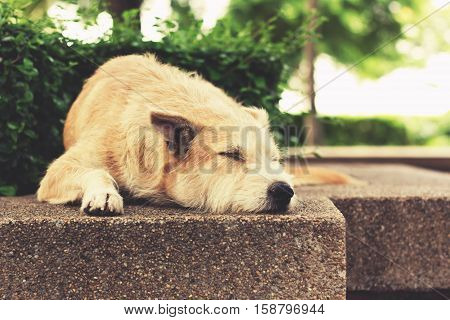 Stray dog sleeping at park. The dog relaxing with closed eyes. Vintage effect tone.
