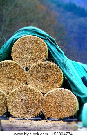 Bales of straw under aqua blue tarpaulin.