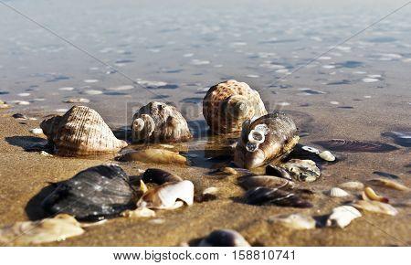 Empty seashells  on the Black Sea coast