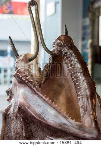 A head with open mouth of giant angler or Lophius piscatorius fish hanging on a hook on sale outside of the greek fish shop. Angler fish jaws of the predator on hook. Vertical. Morning time. Close up.
