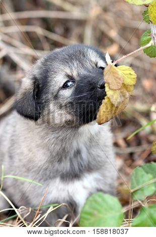 picture of a sad abandoned puppy smelling the laves on the chaparell