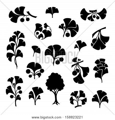 Ginkgo biloba branches with leaves and fruits. Cosmetics and medical plant icons set. Vector illustration in graphic style.