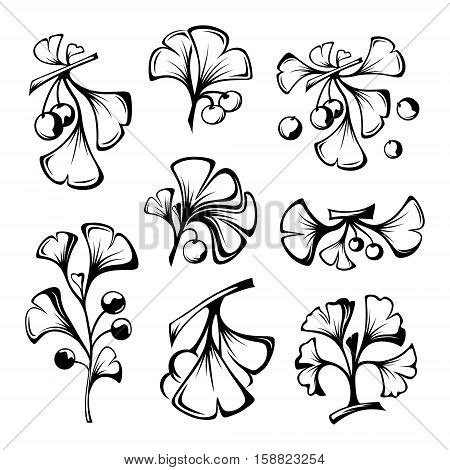 Ginkgo biloba branches with leaves and fruits. Cosmetics and medical plant icons set. Vector illustration in line graphic style.