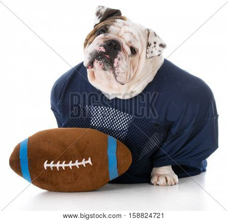 bulldog dressed like a football player on white background