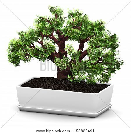 3D render illustration of green miniature bonsai Baobab tree in domestic ceramic flower pot isolated on white background