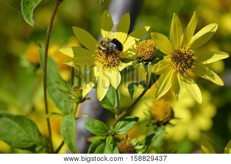 A bee on a yellow flower during summer