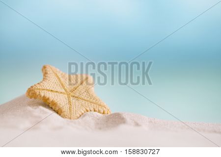 deepwater rare starfish with ocean , beach and seascape, shallow dof