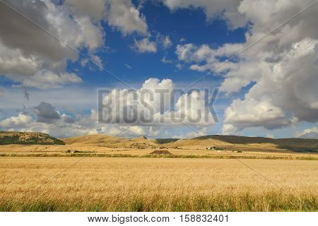 Summer rural landscape: Alta Murgia National Park. Hilly field with cornfields. ITALY, Apulia.	In the background farms and Murge's plateau with canyons dominated by clouds.