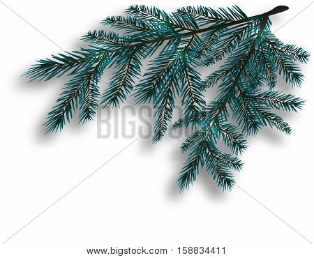 Two blue realistic tree branch. Spruce branches located in the corner. Isolated on white background. Christmas vector illustration