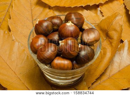 Shiny brown sweet chestnuts in a glass bowl, with a background of brown chestnut leaves.