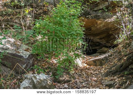 Small entry to stone cave in side of mountain near green vegetation