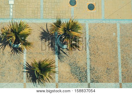 Top view of paving stone manholes decorative dwarf palms and tiles in Rio de Janeiro on bright summer day Brazil