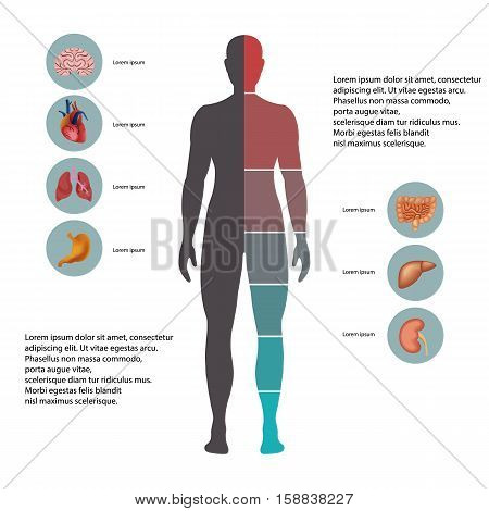 Human body with organs icons. Flat design icons for medical theme. Human anatomy, huge collection of human organs